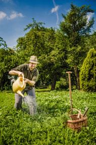 Pressefoto Floh Gemüsegarten